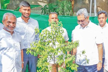 "TREE PLANTING: President Gotabaya Rajapaksa joined yesterday  with the National Tree Planting Programme aimed at planting one million trees under the theme of ""Hadena Ratata - Wedena Gasak""  by planting a sapling at his residence in Mirihana. This programme was launched in accordance with the environment policy outlined in President Gotabaya Rajapaksa's election manifesto, to increase the forest cover of the country from 29%, to 32% within the next five years."