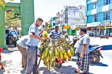 With the onset of summer, the demand for cucumber and melons has increased. Picture by Ampara District Group Corr.