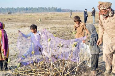 Pakistanis find opportunity in massive locust outbreak by successfully turning pests into poultry feed. The pilot project was implemented in Okara district.