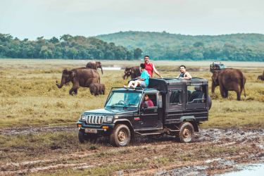 Watching elephants at a national park