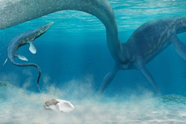 An artist's interpretation of a baby mosasaur hatching from an egg in the Antarctic sea.