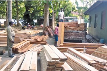 The seized Mahogany. Picture by A.A.L. Dias, Matale District Group Corr.