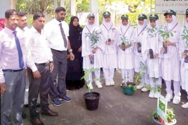 Medicinal plants were presented to participants. (Picture by Addalaichenai Central Correspondent)