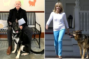 When President-elect Joe Biden and Jill Biden step into the White House in January, he'll also be bringing some furry family members with him — German shepherds Champ and Major. That's right: After a four-year vacancy, there will be not one, but two FPOTUS (First Pets of the United States) once more.