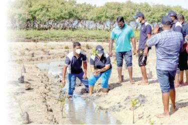 A programme to replant mangrove saplings in coastal and lagoon areas is underway.