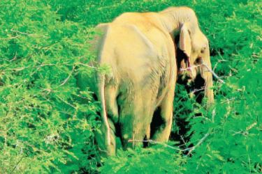 Elephants can appear early morning and evening from the bushes