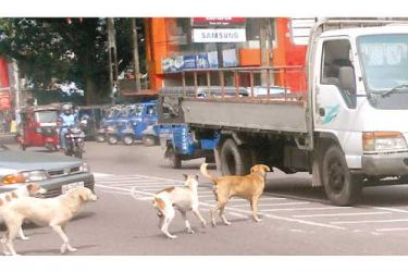 Several dogs crossing the main road.