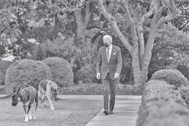 US President Joe Biden walks with his dogs Major and Champ in the Rose Garden of the White House on January 26.