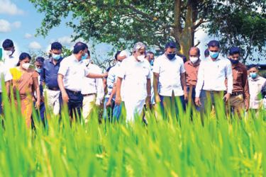 State Minister Siripala Gamalath along with officials inspecting a model farm in the Mahaweli B Zone.