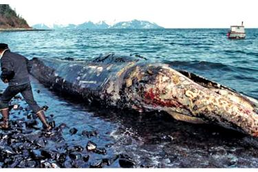 A carcass of a whale washed ashore after the Exxon Valdez disaster.