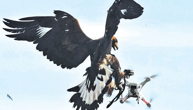 A royal eagle catches a drone during a military exercise at the Mont-de-Marsan airbase, southwestern France.