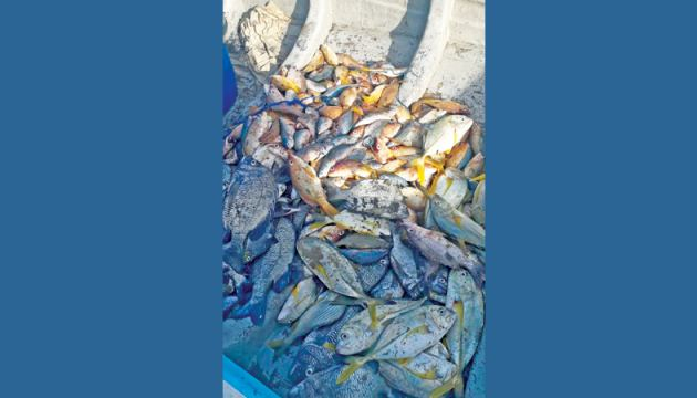 The catch of fish seized by the Navy.