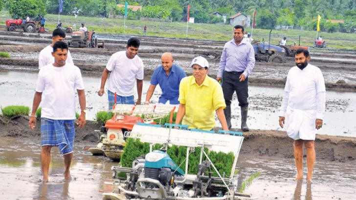 President Maithripala Sirisena yesterday inaugurated the national programme on Local Food Production from Waddakachchi in Killinochchi.  Picture shows the President operating a paddy planting machine. Minister Daya Gamage is also in the picture. Picture by Sudath Malaweera