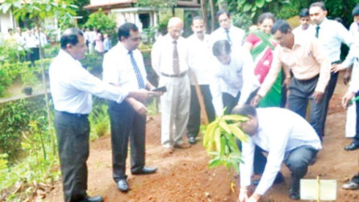 Minister Wasantha Aluvihare planting a mango sapling at the Matale Divisional Secretariat premises.  Picture by A. A. L. Dias, Matale district group corr