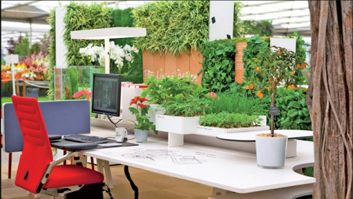 More greenery: When plants were introduced, staff concentration and satisfaction increased and they said the air quality had improved. This may be because foliage absorbs pollutants, dust and bugs from the air