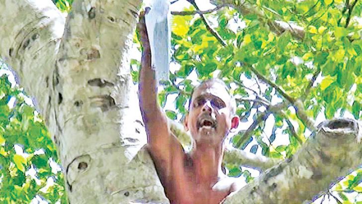 The man protesting stop the tree. Picture by Indika Rangajeewa