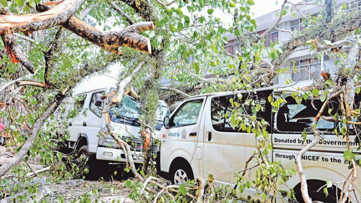 Several vehicles were damaged when a branch of a giant Bo-tree fell on them near the Health Ministry's Family Health Bureau office at De Saram Place in Colombo yesterday. No causalities were reported. The authorities later removed the fallen branch. Picture by Saman Sri Wedage