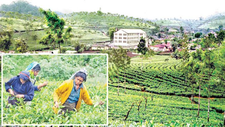 A tea factory and tea plucking in the hills.