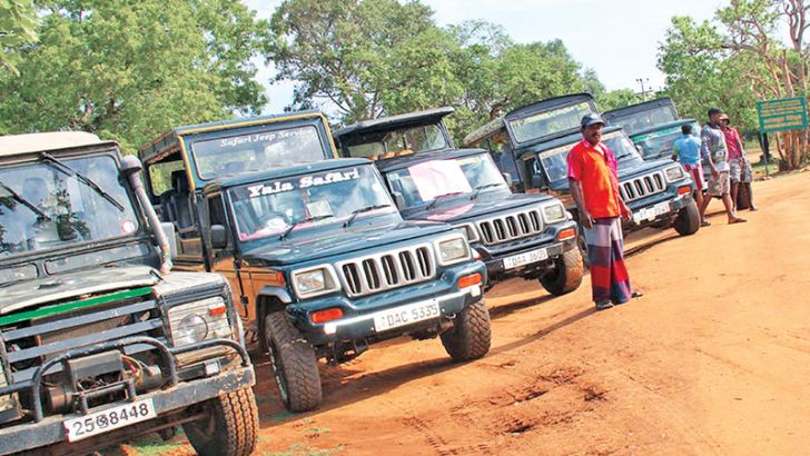A row of safari jeeps.  Picture by K. D. Devapriya,  Kataragama Roving Corr.