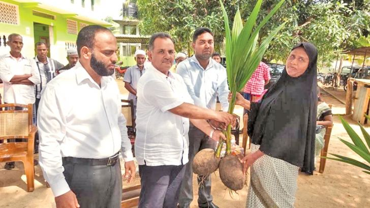 Coconut saplings being presented to a resident.  Picture by I. L. M. RIZAN, Addalaichenai Central Corr.