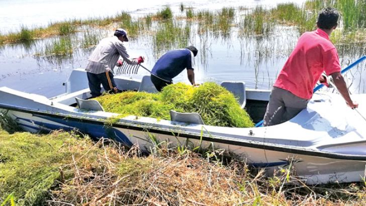 Irrigation labourers engaged in removal of unwanted aquatic plants in the Mahakanadarawa tank.