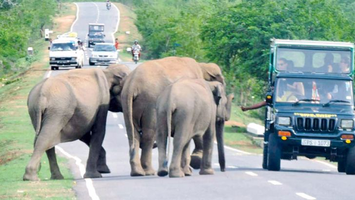 A Safari driver offers some eatables to a herd of elephants on Buttala Katharagama road. Picture by Thennakoon Bandara.