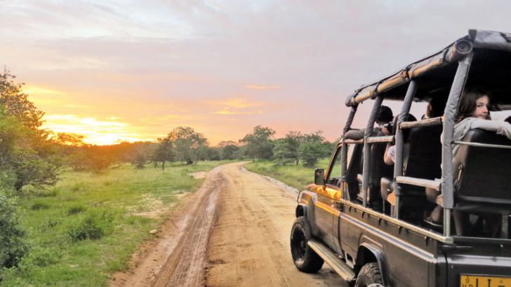 Seeing the wild with experts. Pictures by Noel Rodrigo 'Leopard Safaris'