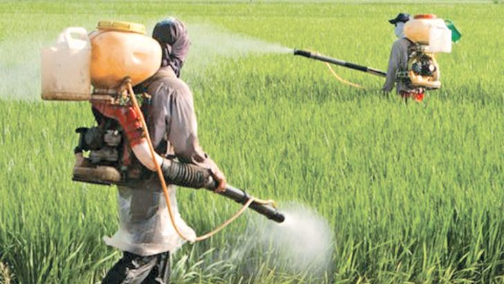 Farmers spraying pesticides on crops.