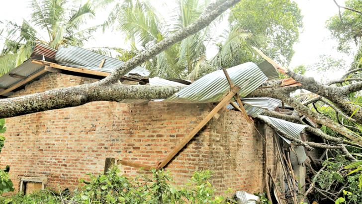 A damaged house with a fallen tree.