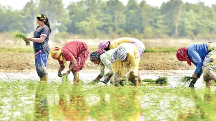Agri workers in Nepal