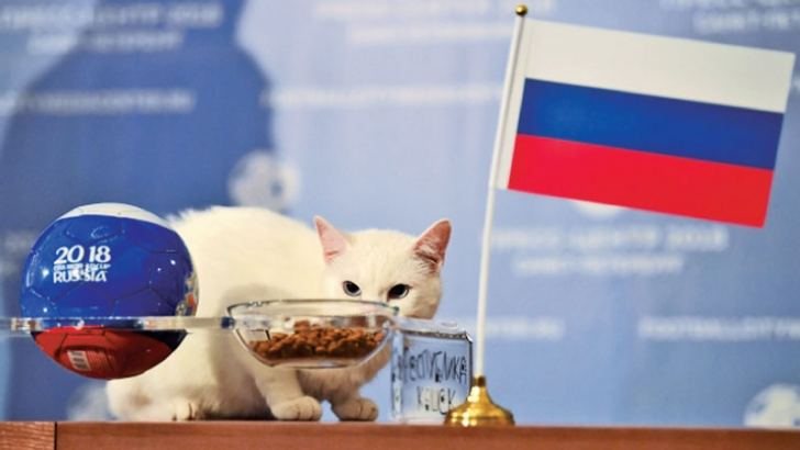Achilles once again sniffed the small football on the table before heading straight for the Russia bowl of food.
