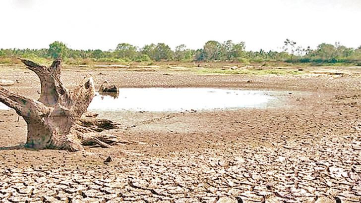 A tank run dry in Nochchiyagama. Picture by Nimal Wijesinghe, Anuradhapura Additional District Group Corr.