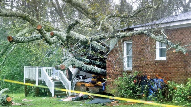 A tree that crashed on a house in Wilmington, North Carolina.