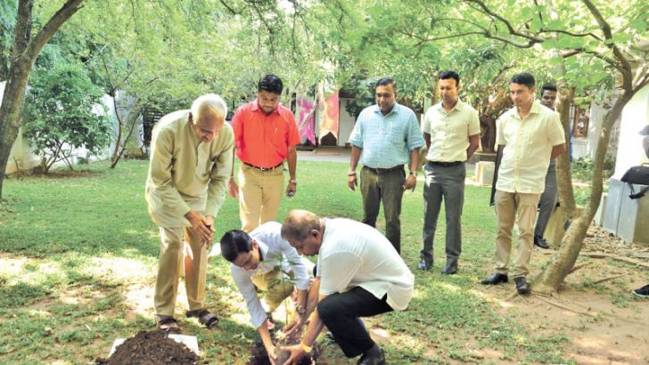 Officials of LB Finance planting a sapling. Picture by Vipula Amerasinghe.