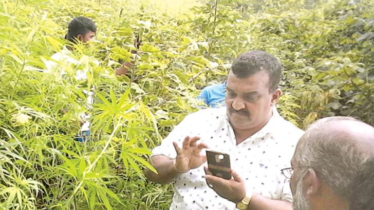 Police officers in the cultivation after the raid.