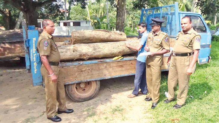 Police officers inspect the teak logs.  Picture by Dineth Kumara