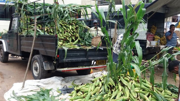 Eastern farmers received bumper maize harvest this time.