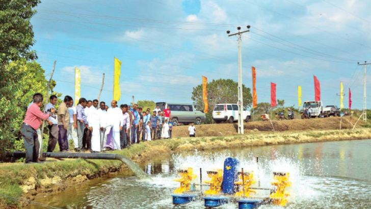 Electricity supply to prawn farmers in Pinkattiya, Chilaw.