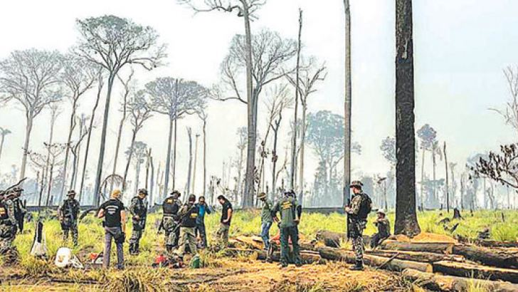 Environmental agency agents investigate illegal deforestation in Jamanxim National Forest in Pará state, Brazil.