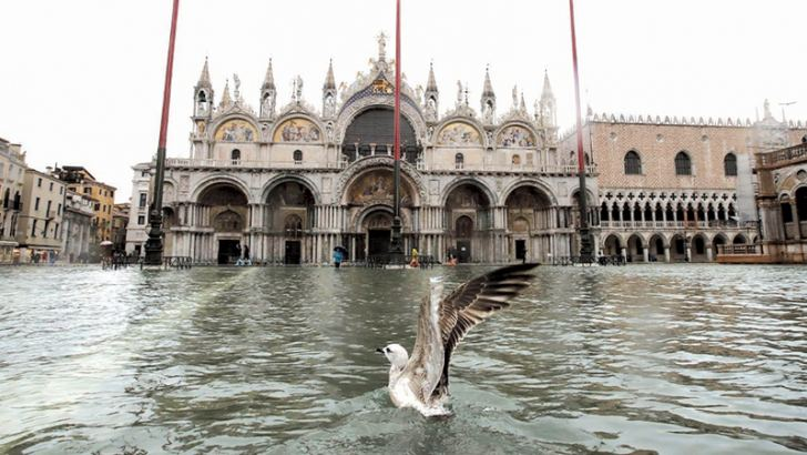 A seagull in a flooded St Mark's Square, in Venice on Tuesday.