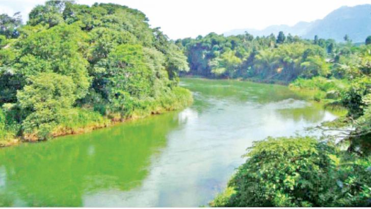 The Malwathu Oya.  Picture by Nimal Wijesinghe, Anuradhapura Additional District group Corr.