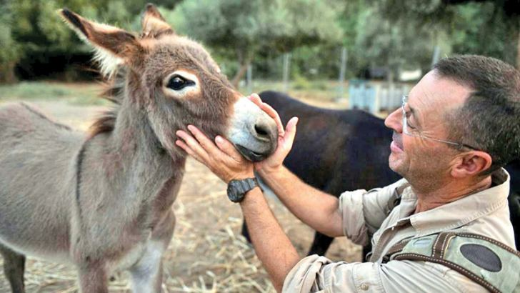 Luis Bejarano, who crossed The Alps with a donkey and a llama, says donkeys interact better with people than horses, who are more suited to physical therapy.