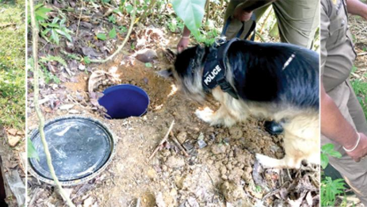Sniffer dog Ruki after detecting a buried barrel of narcotics.