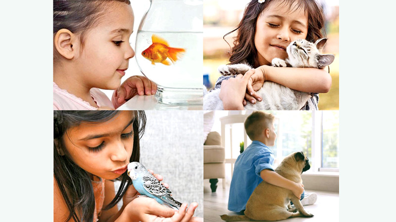 Best Pets For Kids Daily News