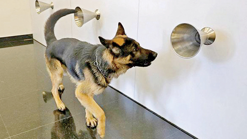 Sniffer dog Rox takes part in a training to detect COVID-19 through sweat samples at a facility in Lebanon's capital Beirut. - AFP