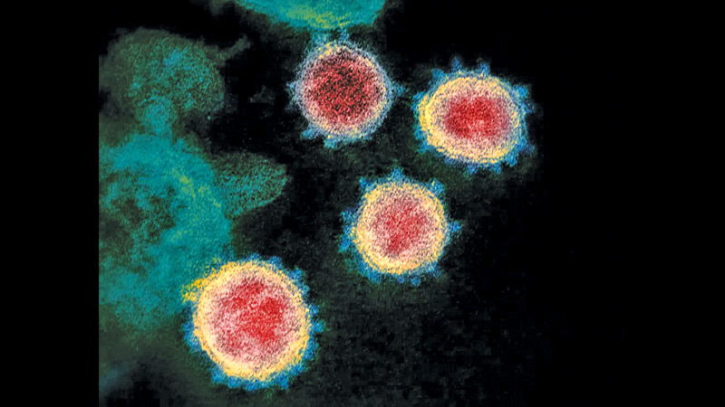 All viruses mutate over time and most mutations have little or no effect on the properties of the virus.