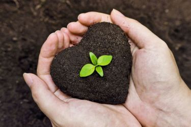 Tender loving care for plants with organic fertilizer