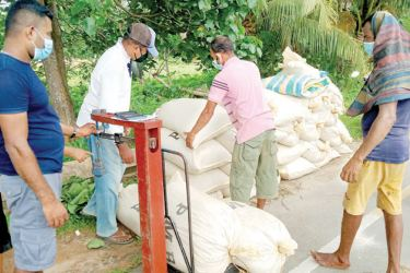 Paddy Marketing Board agents purchasing paddy from farmers in the Galle District.