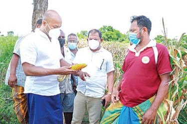 State Minister Duminda Dissanayake along with State Ministry Officials inspecting a maize cultivation in Anuradhapura.