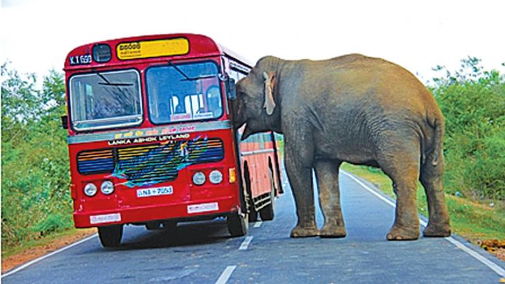 An elephant grabs food offered by commuters